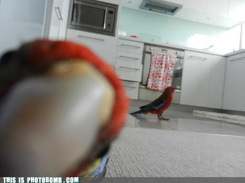 Animal Bomb birds close up parrots - 6229054464