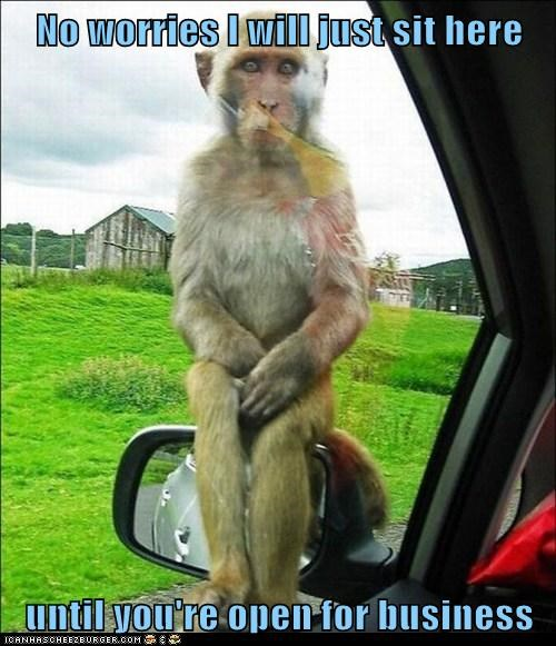 annoying,business,car,monkey,no worries,persistant,side mirror,sit here