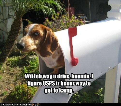 Wif teh way u drive, hoomin, I figure USPS iz beeur way to get to kamp.