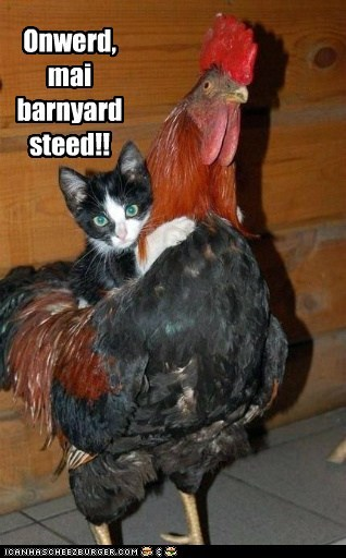 barnyard birds Cats chicken Interspecies Love mount noble steed onward ride riding rooster saddle steed - 6229718016