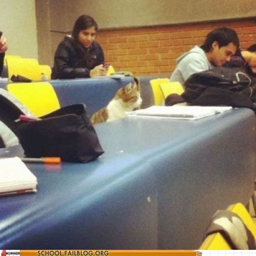 animals cats in class enroll in college silly cat - 6229798400