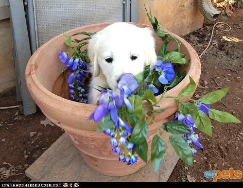 around the interwebs dogs flowers people pets puppies - 6229934848