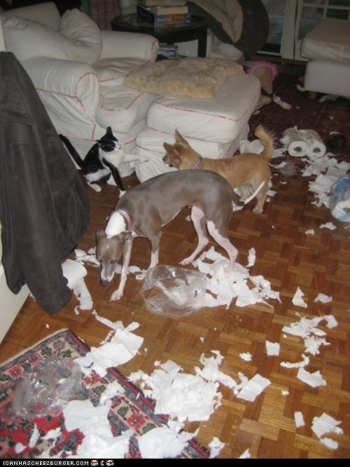 Cats,destruction,disaster,dogs,goggies r owr friends,messes,messy,toilet paper