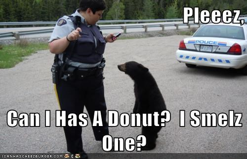 bear,best of the week,cop,cub,cute,donut,Hall of Fame,lost,police,smell