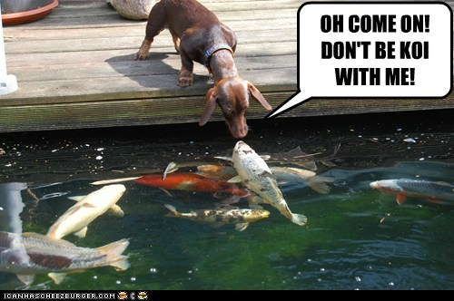 OH COME ON! DON'T BE KOI WITH ME!