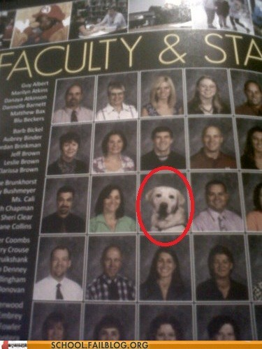 dogs,faculty and staff,professor dog,yearbooks