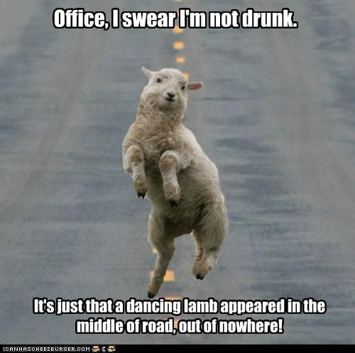 dancing disbelief drunk i swear lamb officer sheep - 6230348800