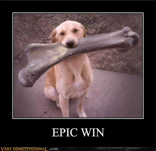bone,dogs,huge,Pure Awesome,win