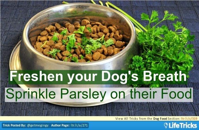 dogs tips dog owner life hacks - 6230789