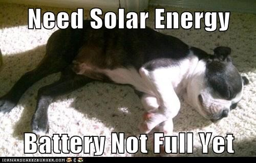 boston terrier,dogs,nap,solar panel,sunbathing