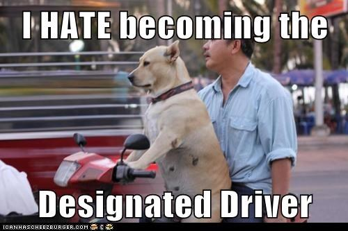 designated driver dogs motor bike what breed - 6231570688