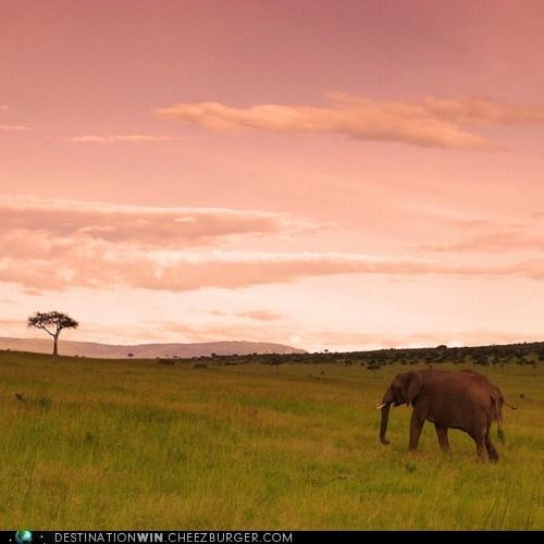 elephant,kenya,Masai Mara