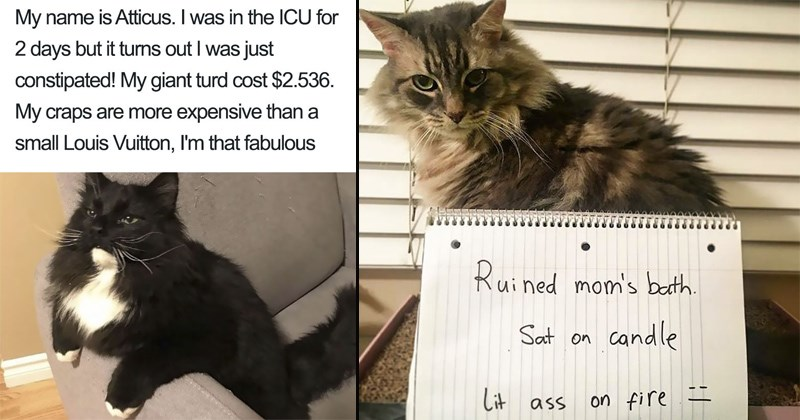 cats next to signs shaming them