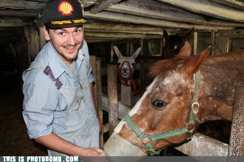 Animal Bomb,farm,horse,llama,photobomb,why are they together