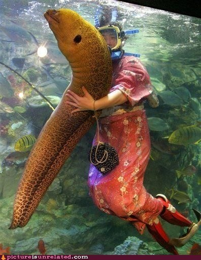 aquarium cuddly eel love wtf