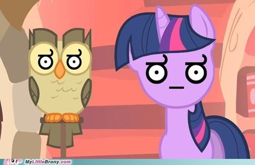 Owl pet the internets twilight sparkle wat - 6232552448