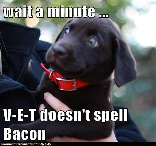 bacon,best of the week,dogs,Hall of Fame,puppy,spelling,tricked,vet