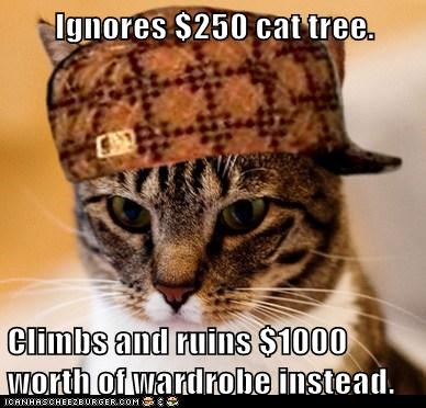 Scumbag Cat - 6233047296