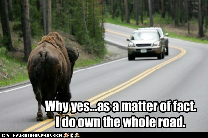 buffalo,car,matter of fact,own,road,selfish,walking