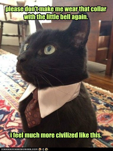 bell,bells,Business Cat,Cats,civilized,collar,fancy,lolcats,noble,tie