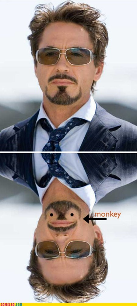 avengers,best of week,facial hair,monkey,robert downey,the internets,upside down