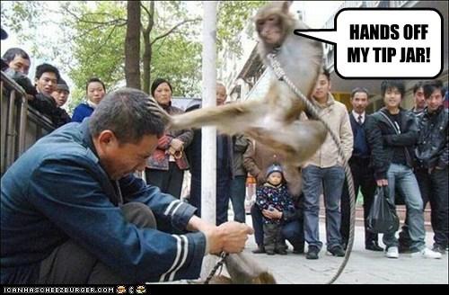 caught kick monkey punished stealing - 6233375232