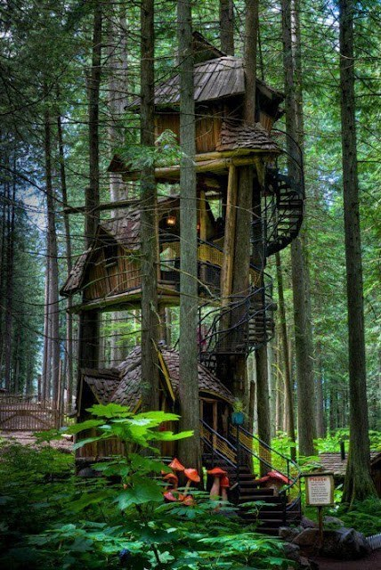architecture Forest Hall of Fame tree house trees - 6233379328