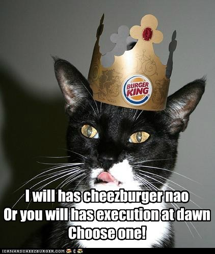 Cheezburger Image 6233404416