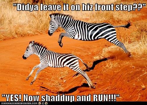 desert dirt running zebras - 6233600512