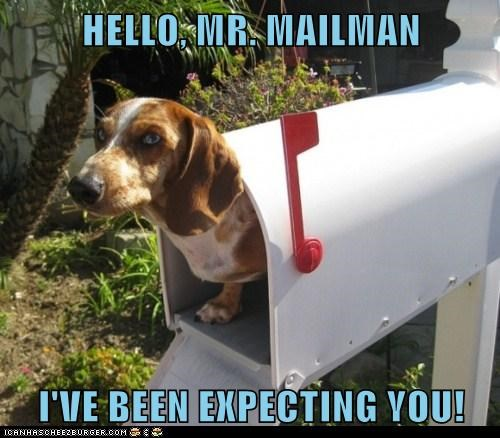 dachshund,dogs,ive-been-expecting-you,mail,mailbox,mailman,surprise
