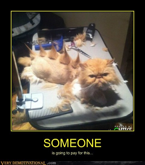 angry cat hair hilarious shaved - 6233752576
