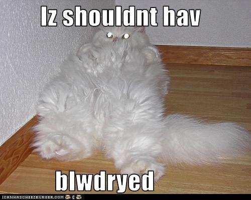 blow dry,classic,classics,fur,fuzzy,hair