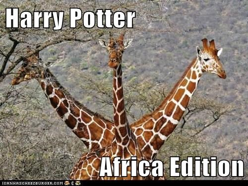 Harry Potter  Africa Edition