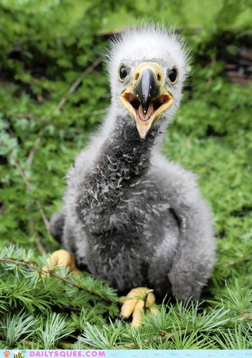 baby bird eagle floof fluff puberty - 6234244096