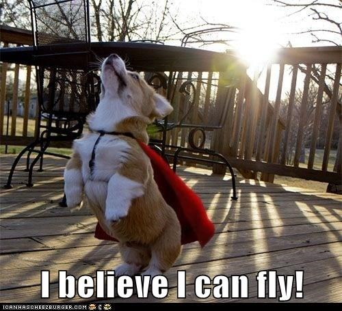 best of the week cape corgi costume dogs flying Hall of Fame