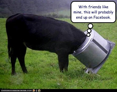 accident,cow,facebook,luck,stuck,with friends like these