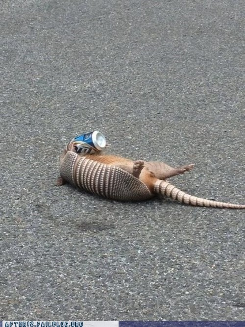 armadillo,crunk critters,miller lite