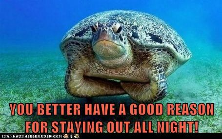 all night,disappointed,in trouble,parent,staying up,turtle
