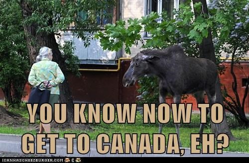 Canada,moose,political pictures