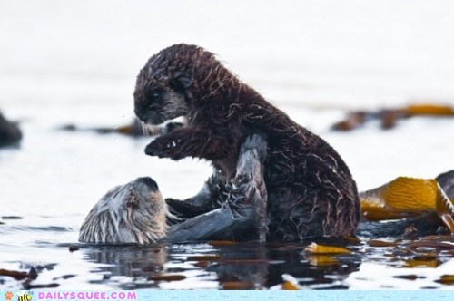 baby Hall of Fame hold hug mommy moms otter otters squee water