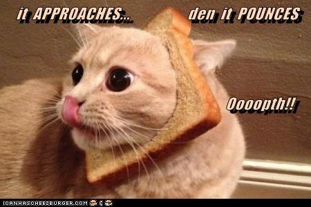 Cheezburger Image 6234638592