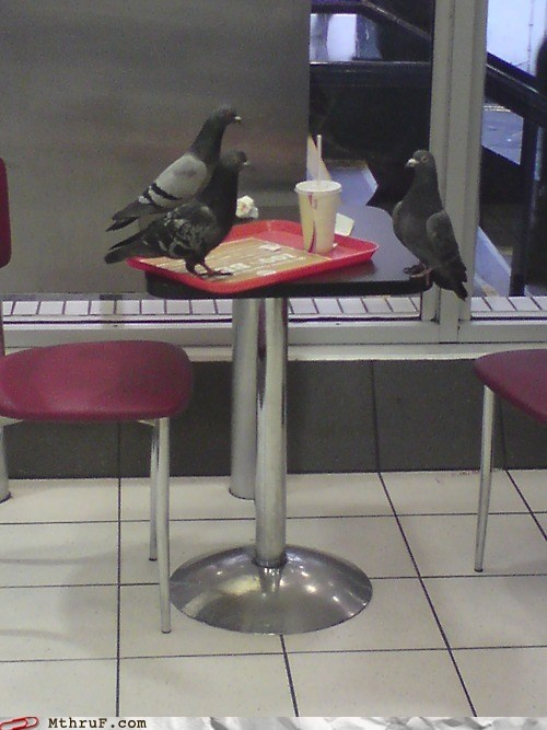 business meeting hong kong McDonald's pigeon - 6234684416