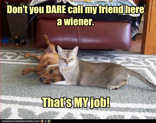 cat Cats dachshund dogs friends low self-esteem my job wieners