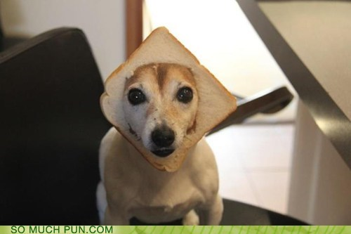 bread,double meaning,homophones,in,inbred,jack russell terrier,literalism