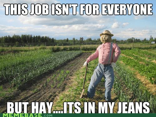 hay Memes pants puns scarecrow straw - 6234974464