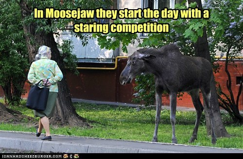moose,political pictures