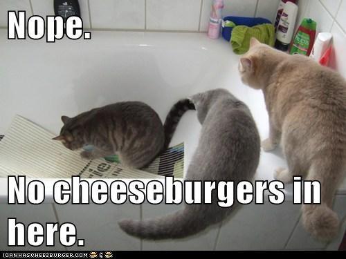 Cheezburger Image 6235148032