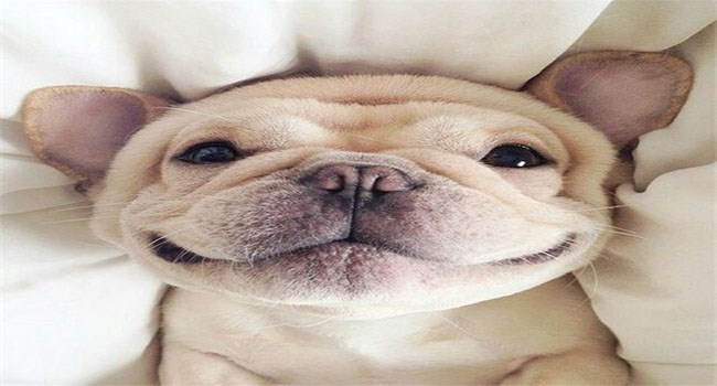 dogs lolz adorable puppies smiling puppies cute lol love funny - 6235653