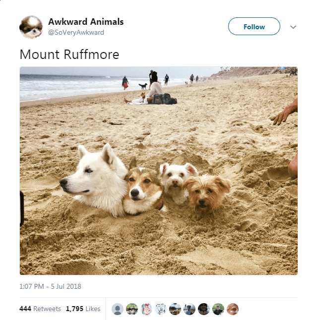 tweets funny tweets animal tweets animals - 6235909