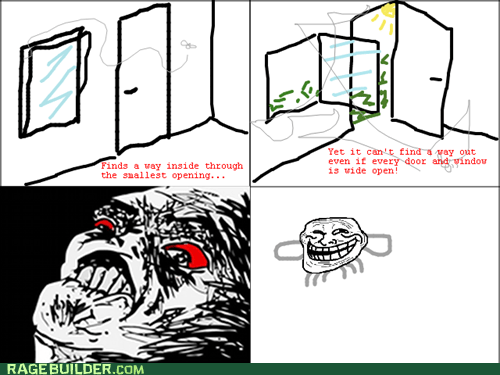 bugs fly Rage Comics raisin rage